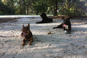 dog-training-testimonials